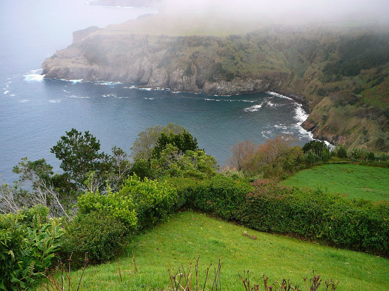Misty Morning View ~ Azores Bay View Beauty In Nature Cliff Day Fog Green Fields Mist Nature No People Ocean View Outdoors Portugal Sea Seascape Sloping Hills Tree Water