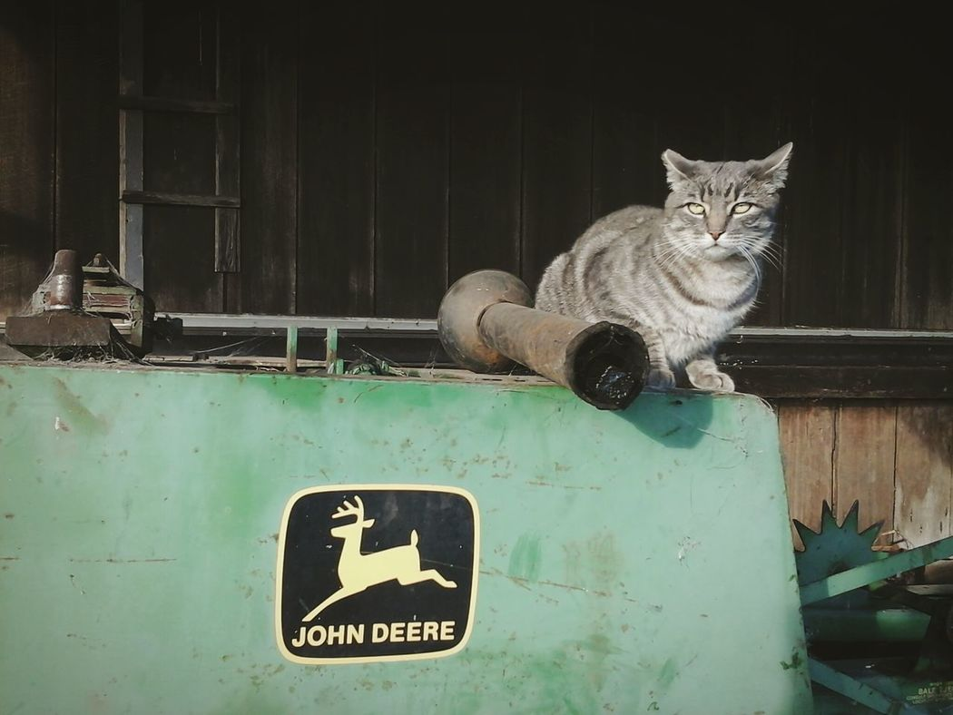 Cat Watching Check This Out Ranch Life John Deere Taking Photos Enjoying Life Old Barns Old Equipment The Great Outdoors From My Point Of View