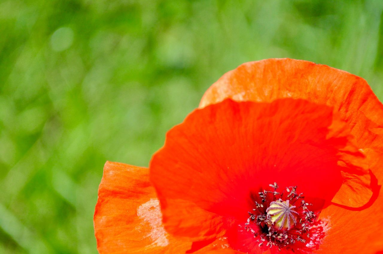 Background Backgrounds Beauty In Nature Blooming Close-up Colorful Colors Extreme Close-up Flower Flower Head Fragility Growth IKEA Nature Outdoors Painting Petal Poppies  Poppy Poppy Flower Poppy Flowers Red Summer Wallpaper