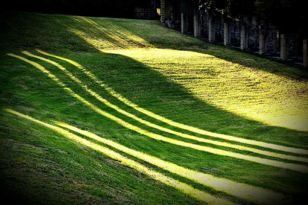 Linee pendenti La Scarzuola Linee Ombre Luce Alberi Fantastici First Eyeem Photo