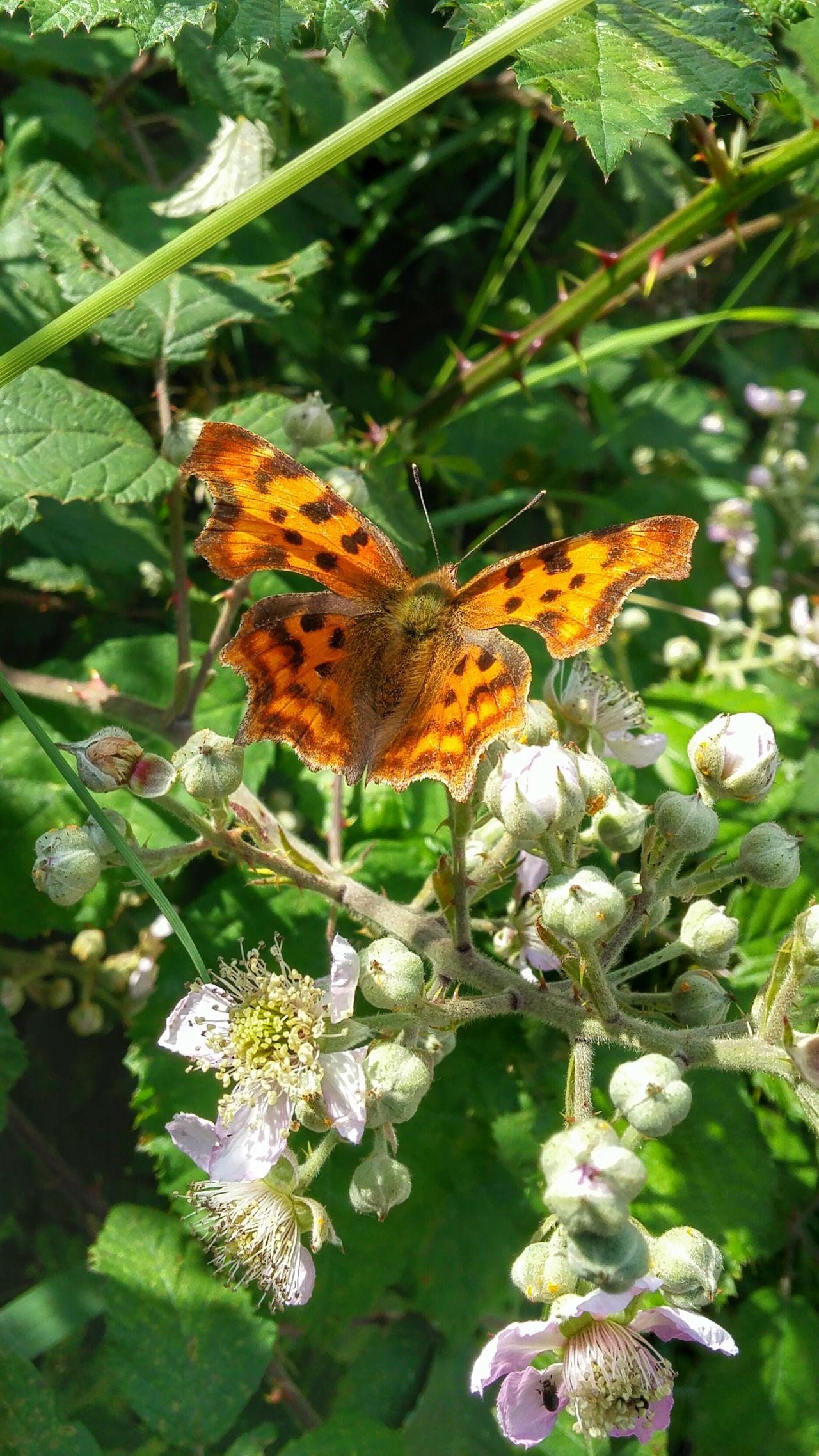 Schmetterling Handyphoto Blüten