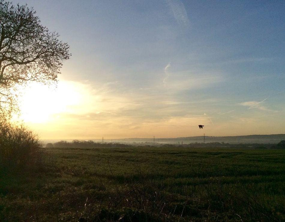The view across the fields at Sunrise Sunrise Rettendon Essex