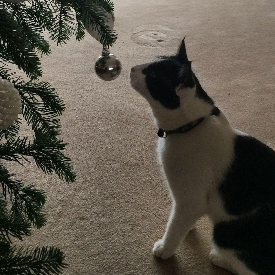 Animal Themes Bauble Christmas Christmas Spirit Christmas Tree Close-up Day Dog Domestic Animals Indoors  Mammal No People One Animal Pets Tree