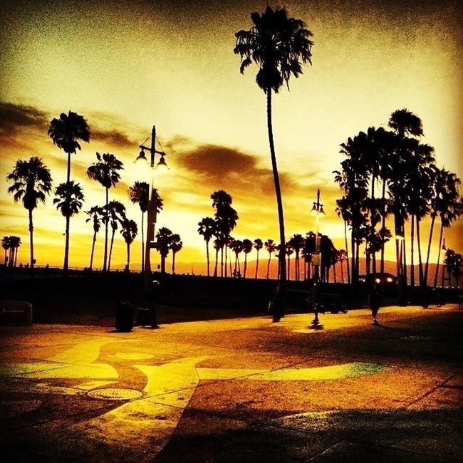 Eyeem Beach Shots EyeEm Palm Trees Enjoying Life Sunset Sunset Silhouettes Venicelife Gods Light Venice Streetphotography