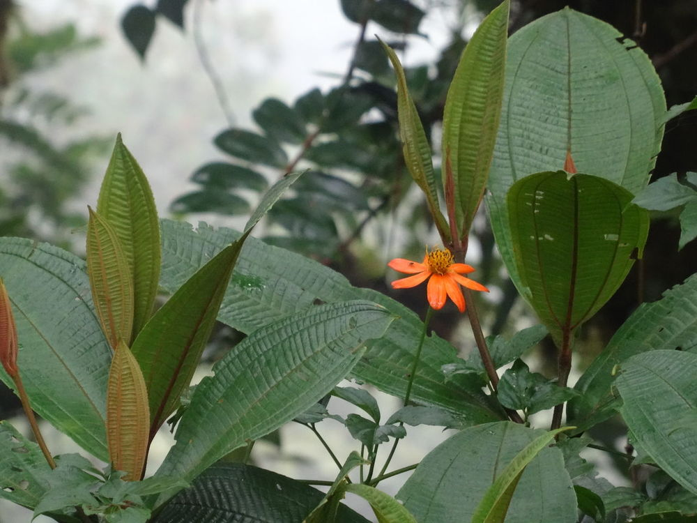 Orange flower surrounded by green leaves Beauty In Nature Blooming Close-up Day Flower Flower Head Focus On Foreground Fragility Freshness Green Color Growth Leaf Nature No People Outdoors Petal Plant