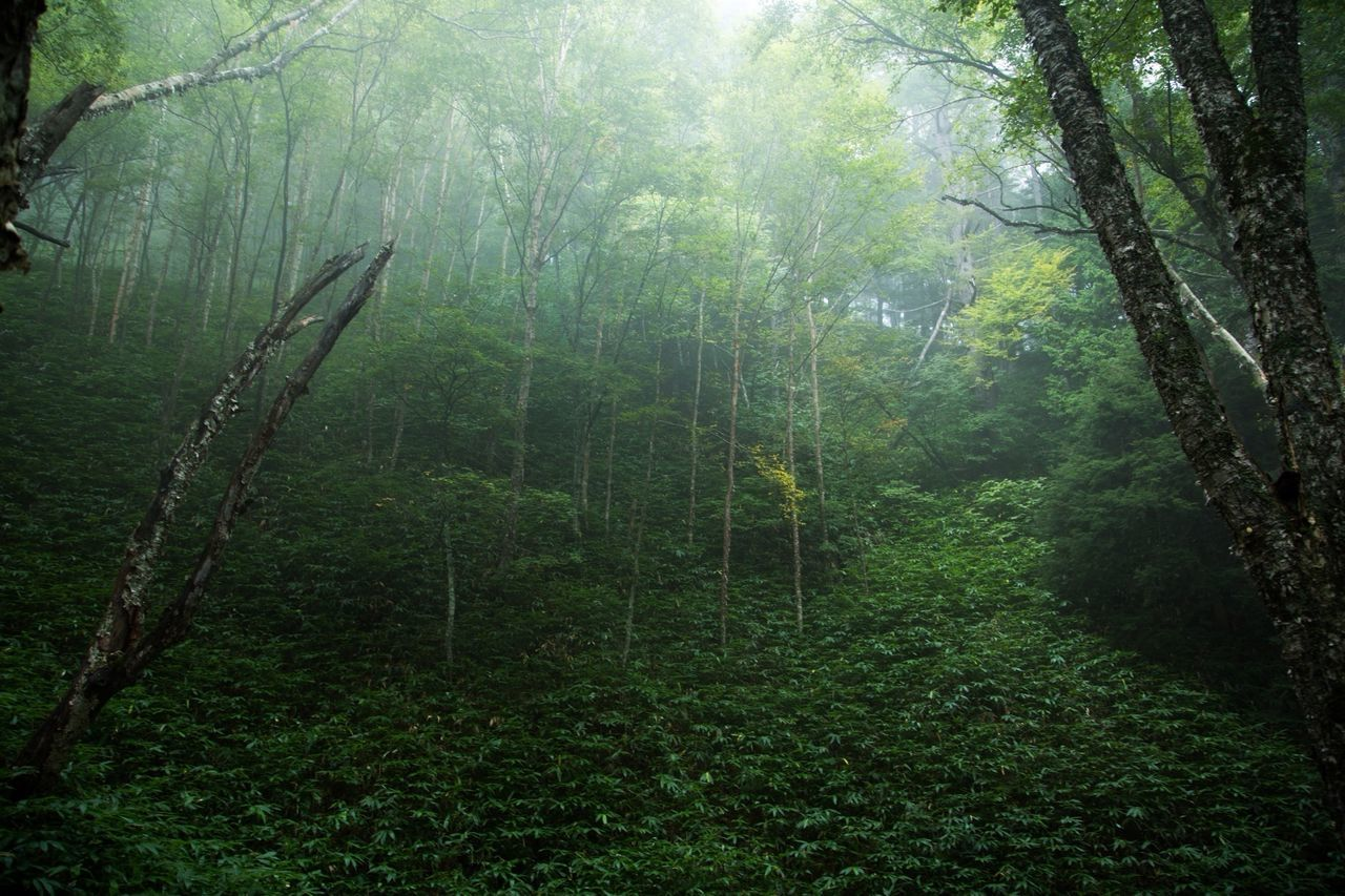 Beautiful stock photos of rainforest, Day, Fog, Forest, Green Color