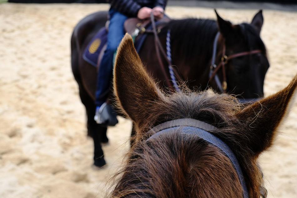 Bridle Depthoffield Domestic Animals Horse Horseriding Livestock Outdoors Saddle Stirrup