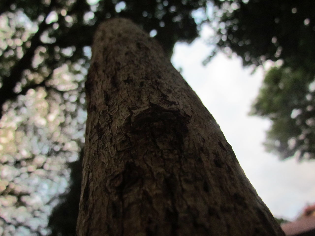tree trunk, tree, nature, day, bark, focus on foreground, low angle view, no people, trunk, textured, rough, outdoors, close-up, growth, branch, beauty in nature, sky, dead tree
