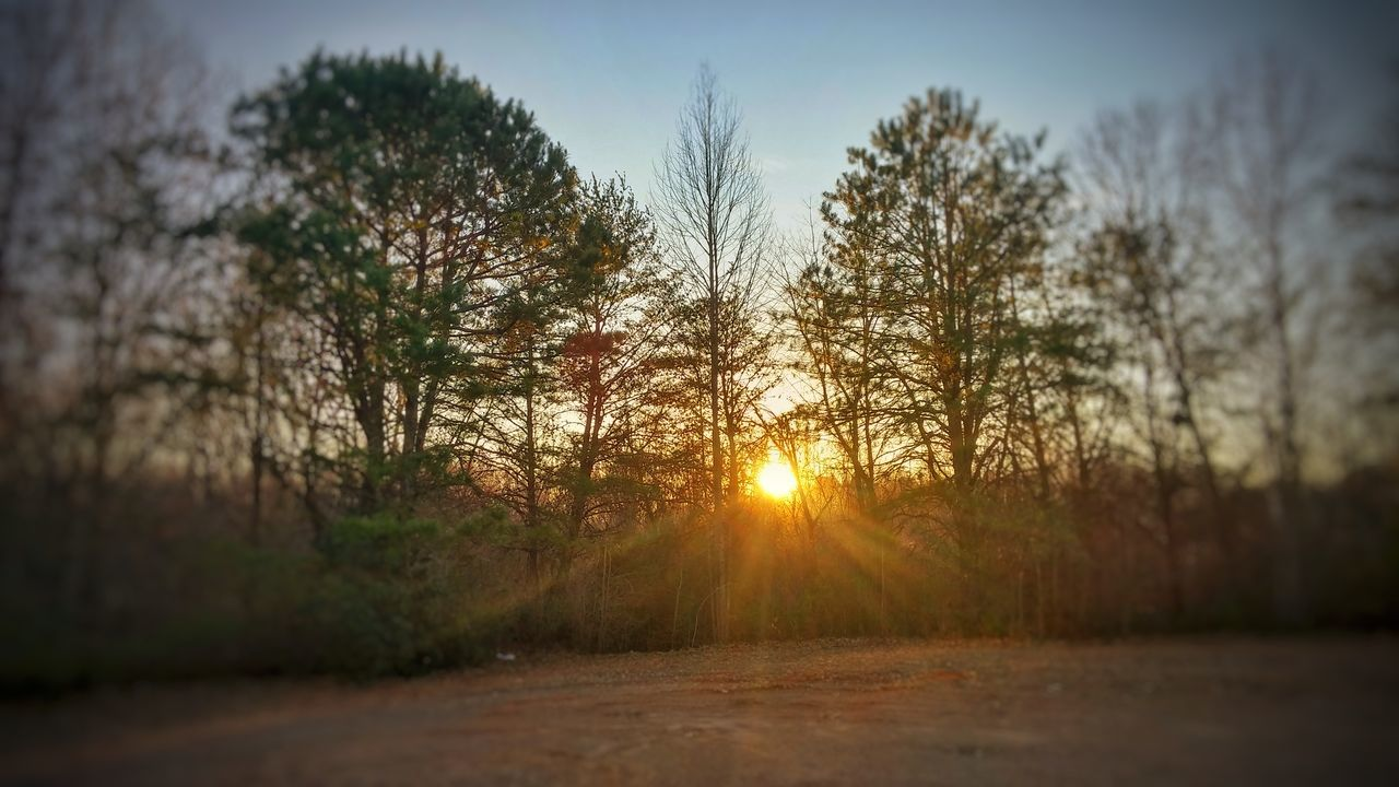 sun, nature, sunset, tranquility, bright, beauty in nature, sunbeam, sunlight, tree, no people, tranquil scene, scenics, landscape, outdoors, growth, sky, day