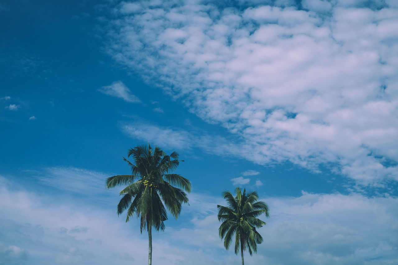 Beach Beauty In Nature Cloud - Sky Coconut Growth Head Shot  Leaves Minimal Nature Outdoors Palm Scenics Sky Summer Sunny Top Shot Tranquility Travel Tree Tropical Climate Two Trees EyeEmNewHere