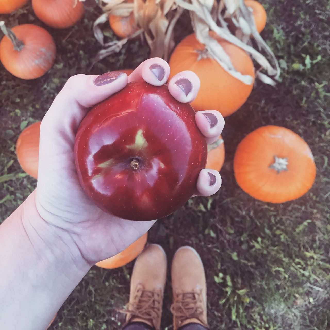 Adult Autumn Close-up Day Fall Food Food And Drink Freshness Growth Healthy Eating Holding Human Body Part Human Hand Low Section Nature One Person Outdoors People Pumpkin Pumpkin Patch Real People