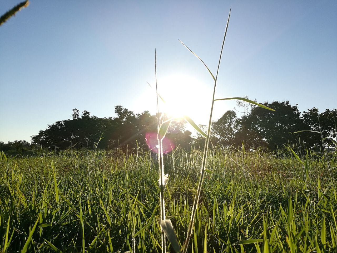 Sunlight Nature Plant Grass And Sky Grassfield