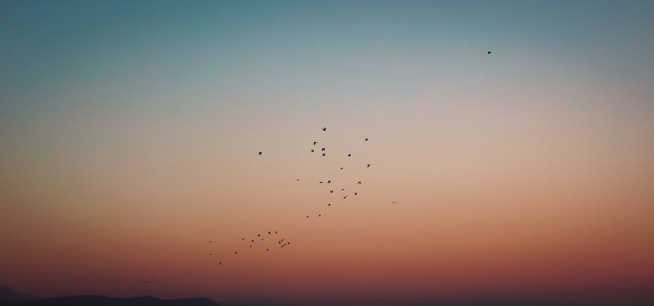 bird, flying, animals in the wild, animal themes, sunset, migrating, flock of birds, large group of animals, animal wildlife, wildlife, silhouette, nature, mid-air, beauty in nature, no people, outdoors, sky, scenics, low angle view, spread wings, bird of prey, day