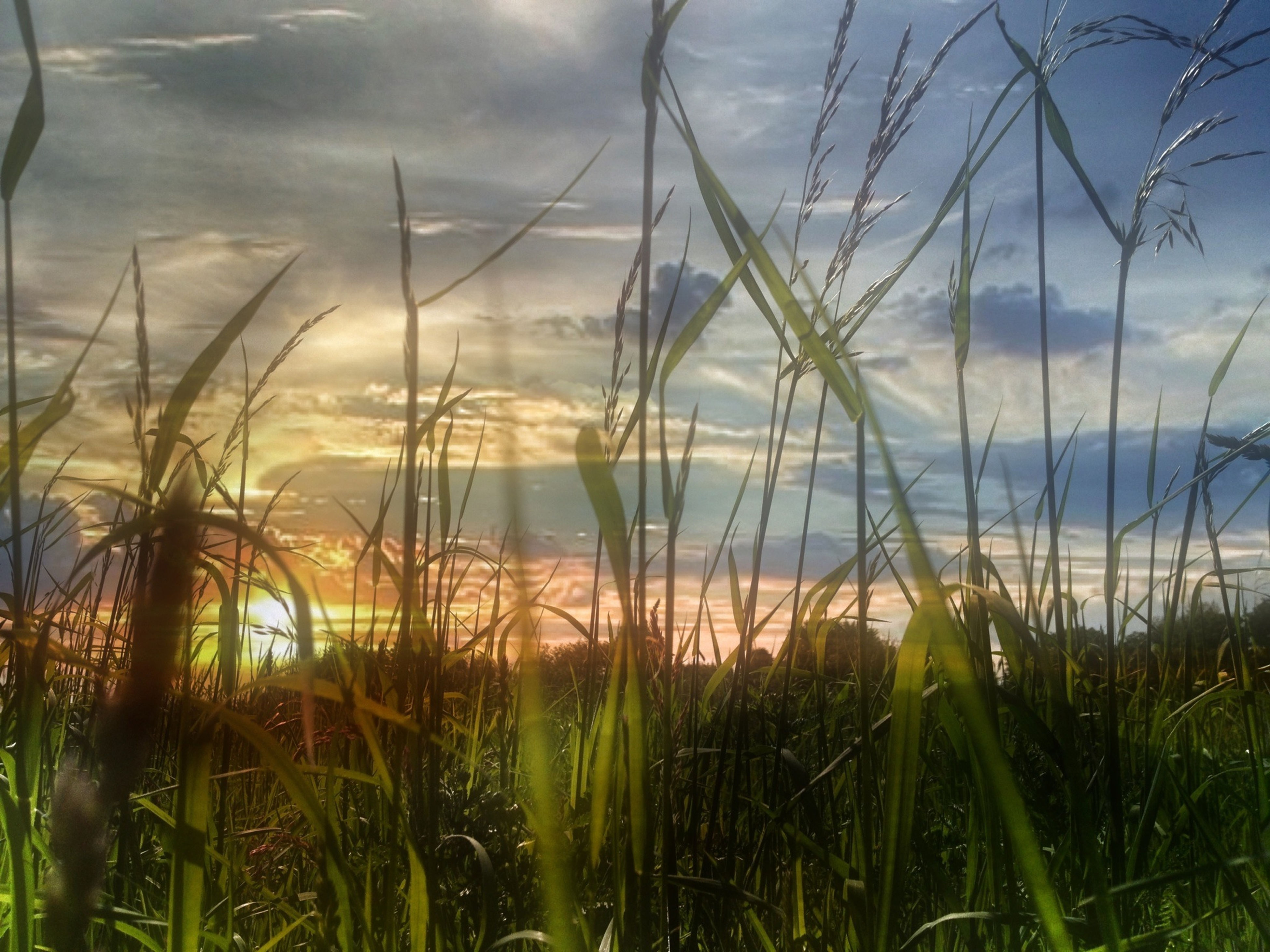 grass, sky, tranquility, tranquil scene, water, plant, scenics, beauty in nature, growth, nature, cloud - sky, cloud, cloudy, sunset, idyllic, sea, field, horizon over water, outdoors, growing