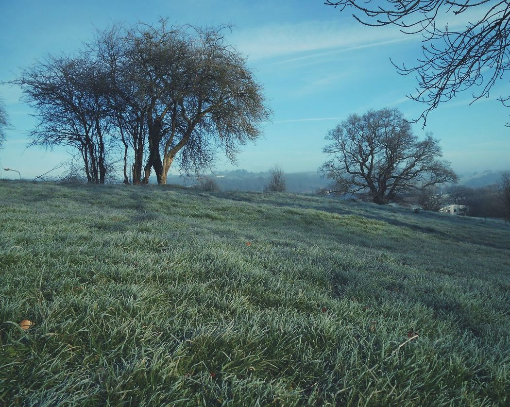 ... Frosty Trees ... Sky Blue Field Newtown Powys Winter Wales Park Grass Tree Haze иней трава деревья Day Outdoors Contrails