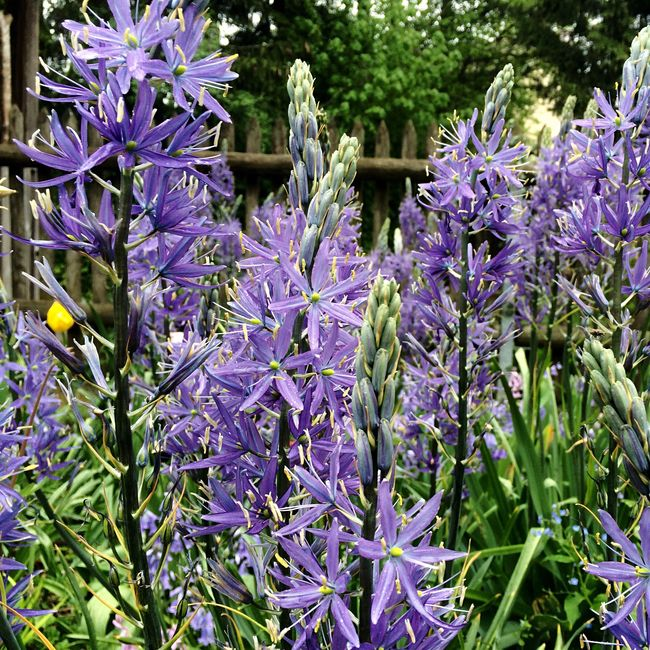 Blue Flowers in Nature Gardens