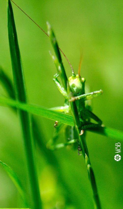 Nikon Macro Nature Green Insect Glasshopper