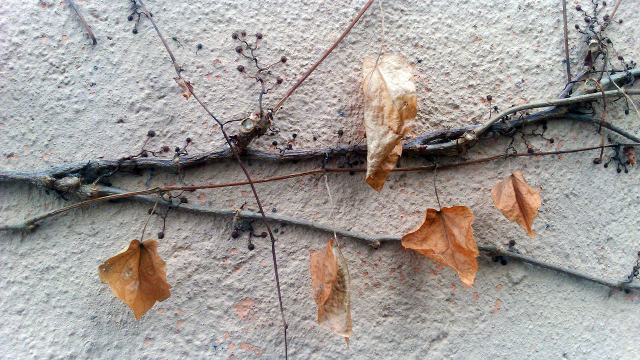 Close-up Deadwood  Dried Plant Leaf Leaves Minimalism No People Outdoors Tree Wall Winter