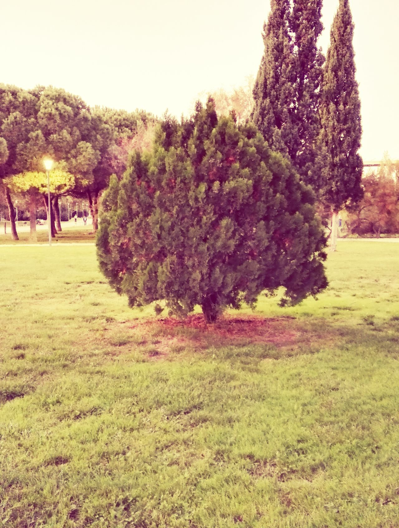 Parque Das Nações Lisbon - Portugal Green Treescollection Bushes And Trees Beauty In Nature Day No People Nature Grass Green Color Growth