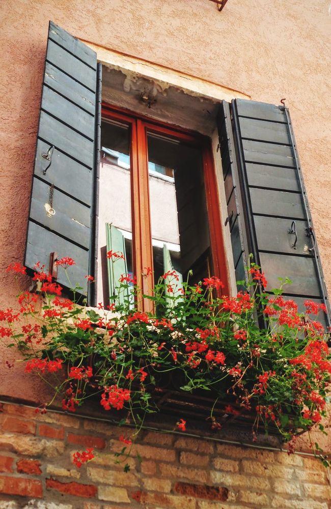 Flower Box Windowbox Window Box Flowers Window Box Planter Red Flowers Red Geraniums Planter Box Red Flowers Flowers In Window