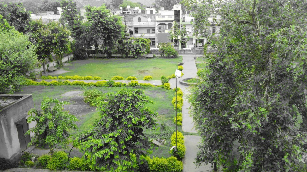 built structure, architecture, building exterior, growth, tree, plant, green color, day, no people, outdoors, residential building, leaf, city, nature