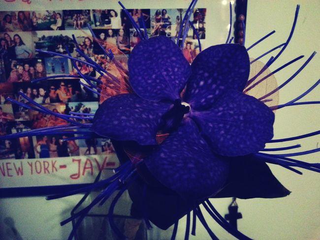 early birthday present :) MyBirthday Flowers Happiness Smile