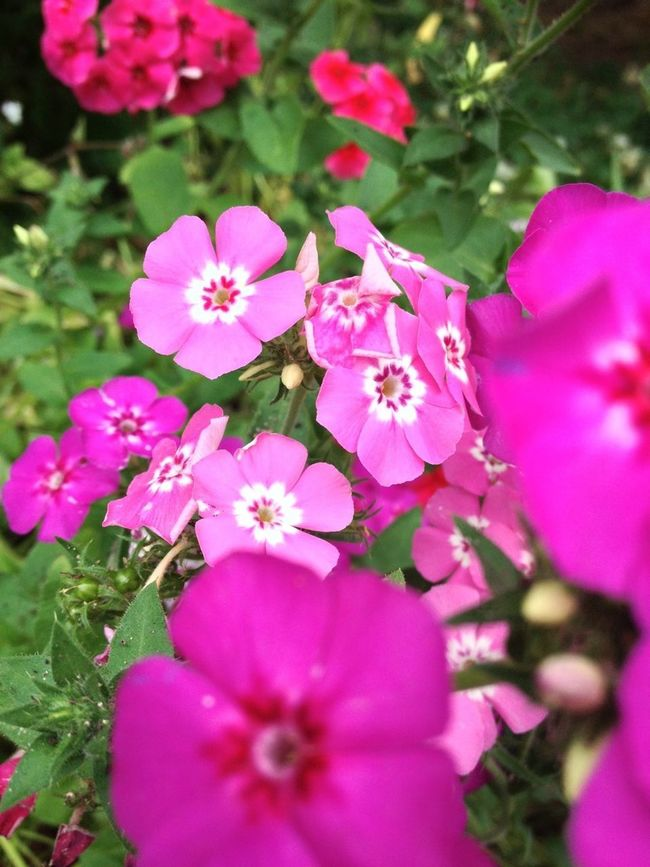 Flowerporn Nature_collection #nofilter#noedit EyeEm Nature Lover