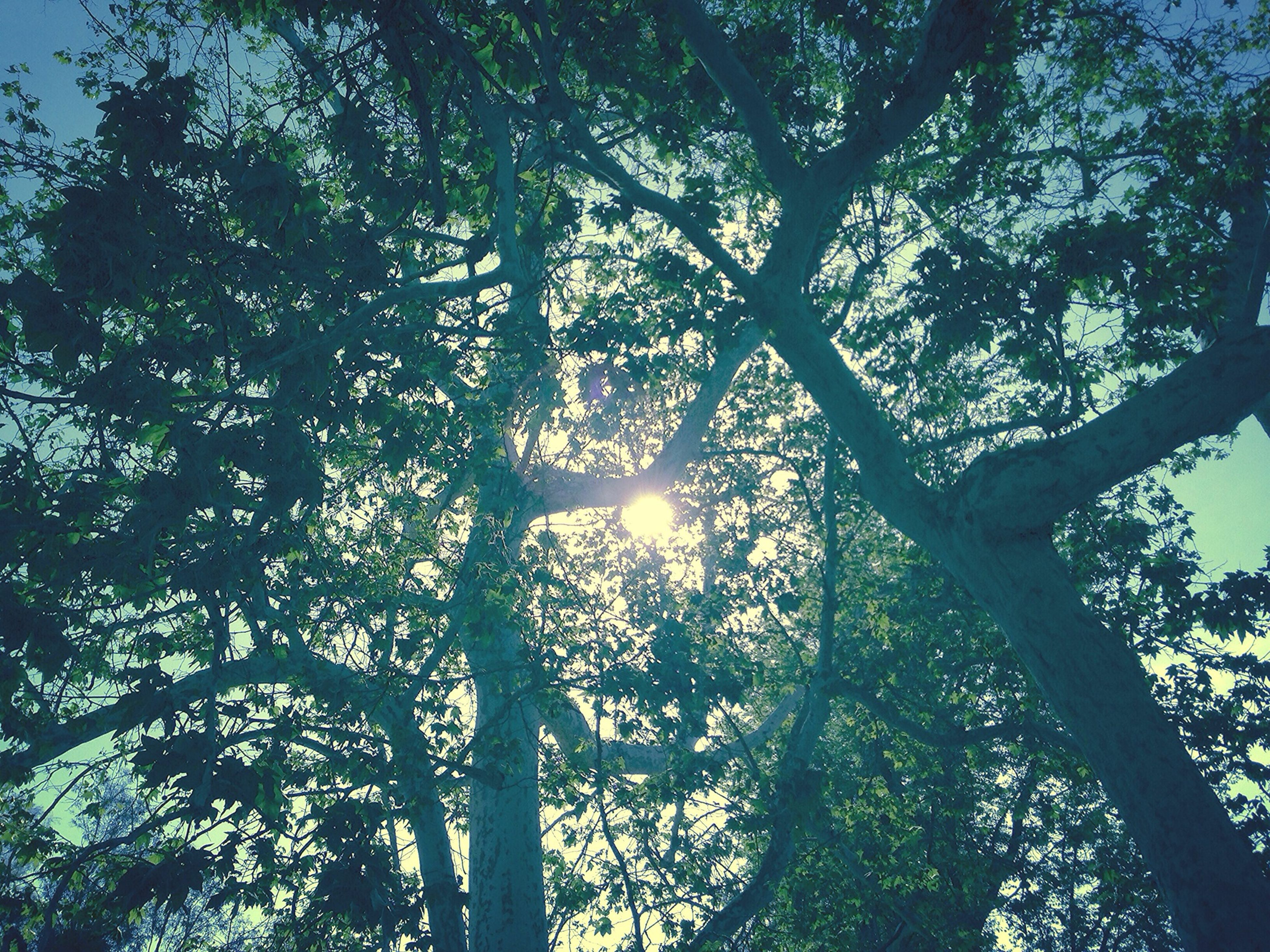 tree, low angle view, branch, growth, tree trunk, tranquility, sun, nature, sunlight, silhouette, sunbeam, beauty in nature, sky, back lit, scenics, lens flare, forest, tranquil scene, outdoors, no people