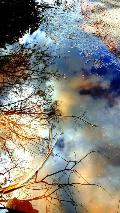 Samsungphotography Samsung Galaxy S6 Galaxys6 Galaxy Camera Skyreflection Skyreflections Water Reflections Watermirror Naturalmirror Treereflection EyeEm Best Shots EyeEm Nature Lover EyeEm Gallery Exceptional Photographs 43 Golden Moments Colour Of Life