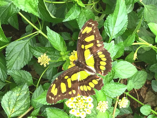Thebutterflyplace Evolved Taking Pictures Flowers Butterfly Camouflage