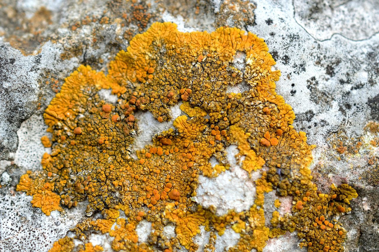 Lichen on a Rock Lichens Close-up Close Up Macro Nature Macro Macro_collection Macro Photography Growth Day Spring Springtime Nature Nature Photography Nature_collection Nikon Germany Showing Imperfection Outdoors Backgrounds Background Yellow Microcosm Lichen Pattern