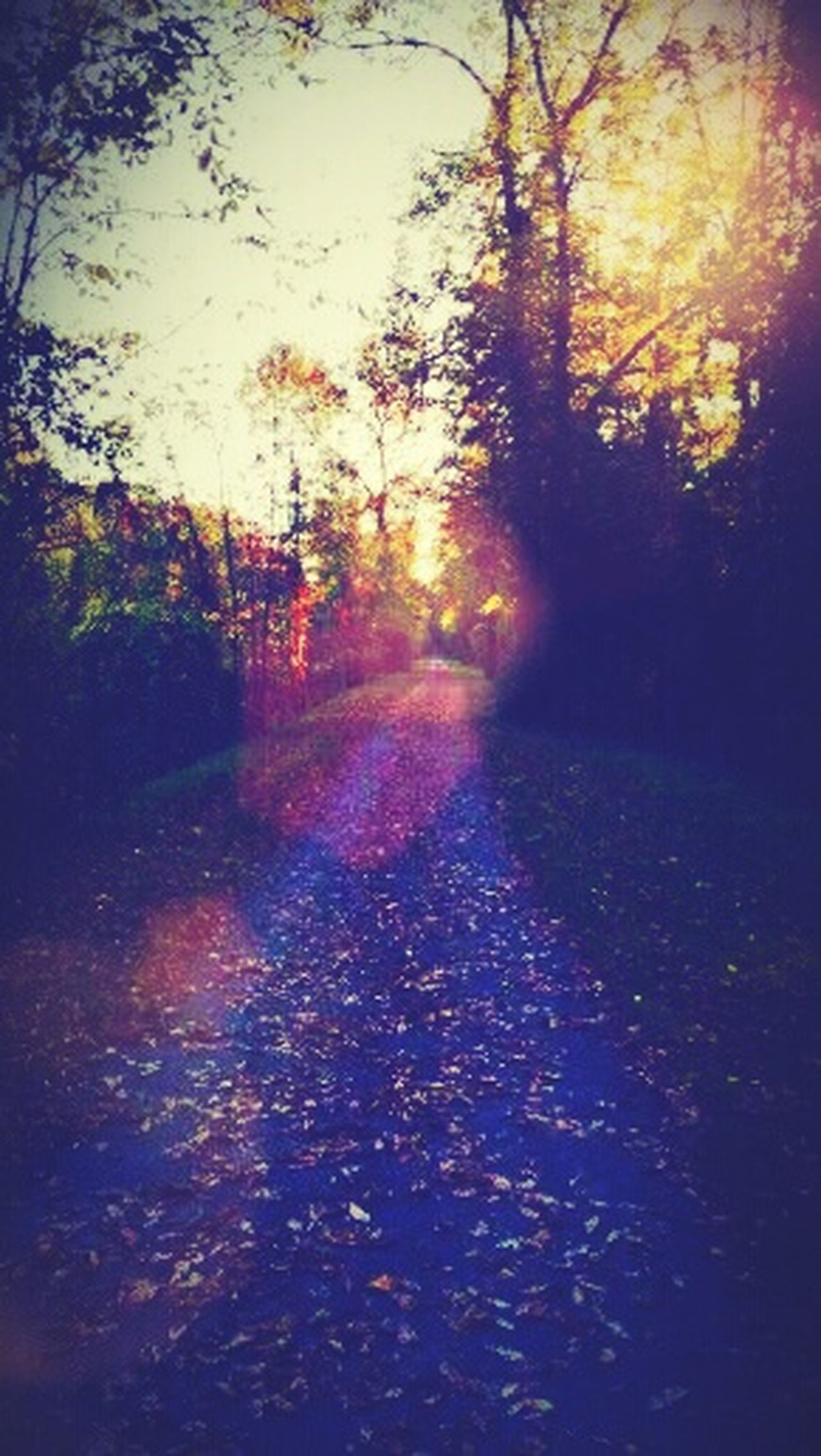 Fall Walks Towpaths Early Evening Lovely Night! Walking Around Pathways Autumn Collection Fall Season Sunrays