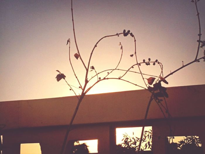Simplicity Balcony Clear Sky Plant