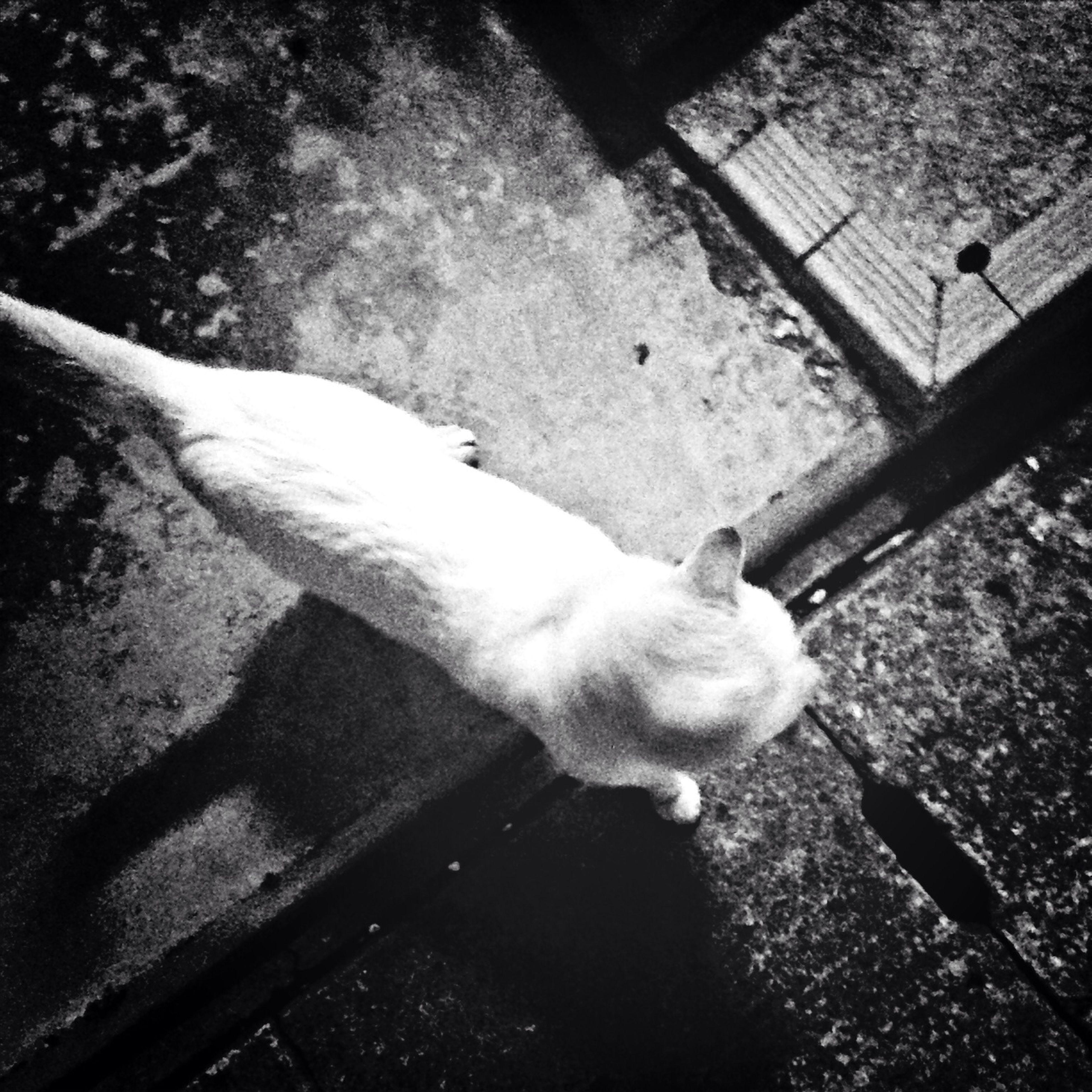 animal themes, one animal, domestic animals, pets, mammal, high angle view, domestic cat, cat, full length, feline, dog, sunlight, street, outdoors, shadow, day, wildlife, standing, sidewalk, walking
