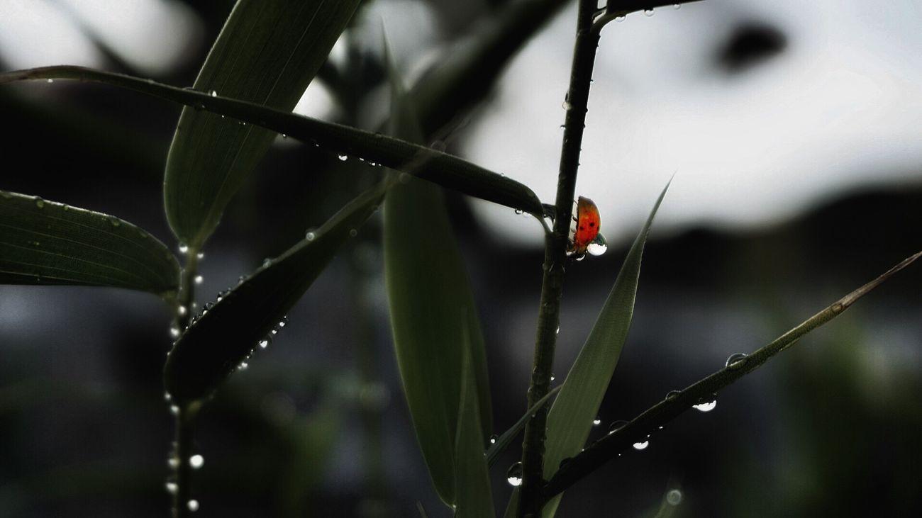 Ladybug takes a water bath
