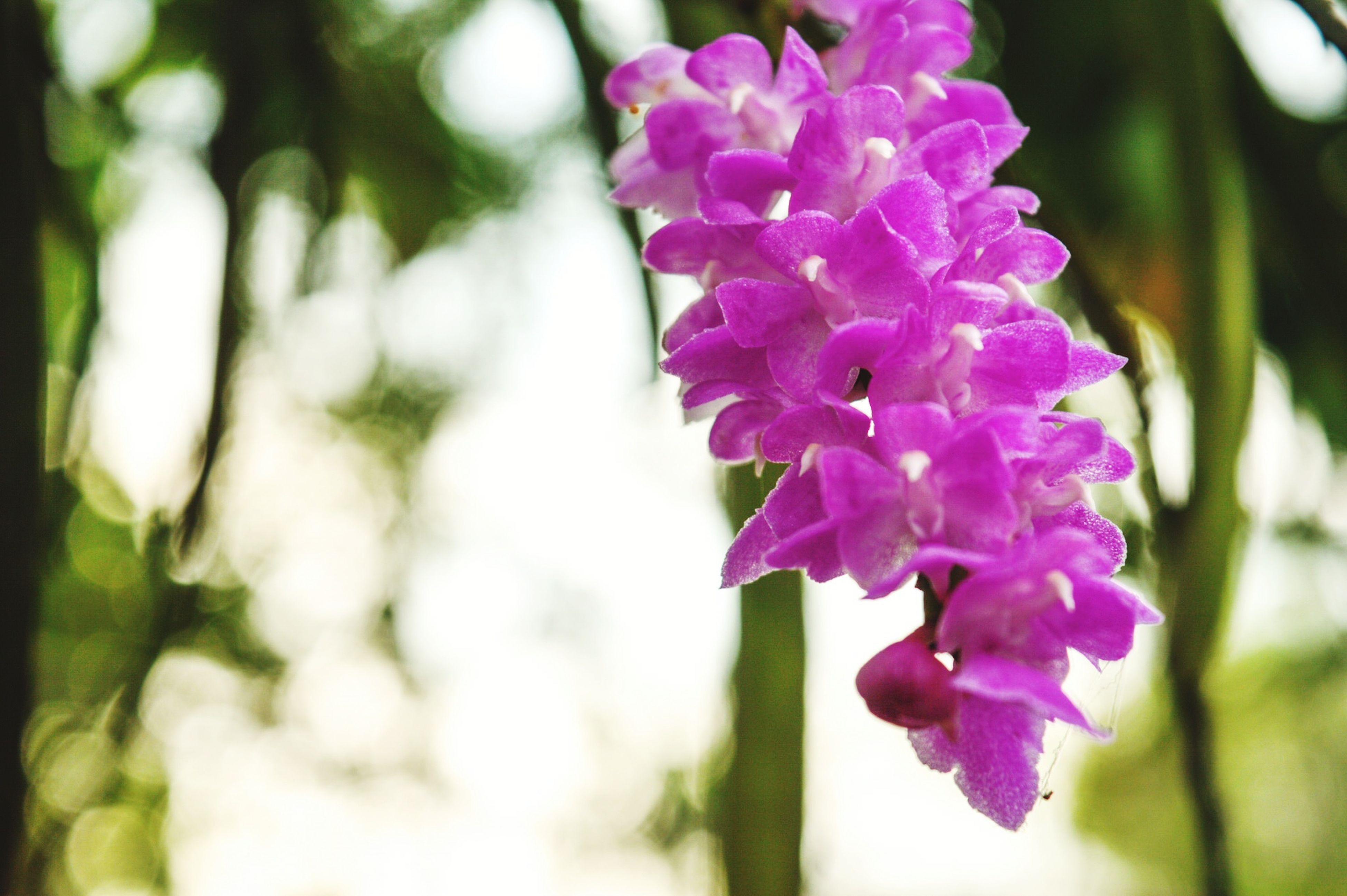 Meghalaya Westgarohills Orchid Orchid Blossoms Landofclouds Nature Photography Nature EyeMeCapture Naturelovers Nature Lover