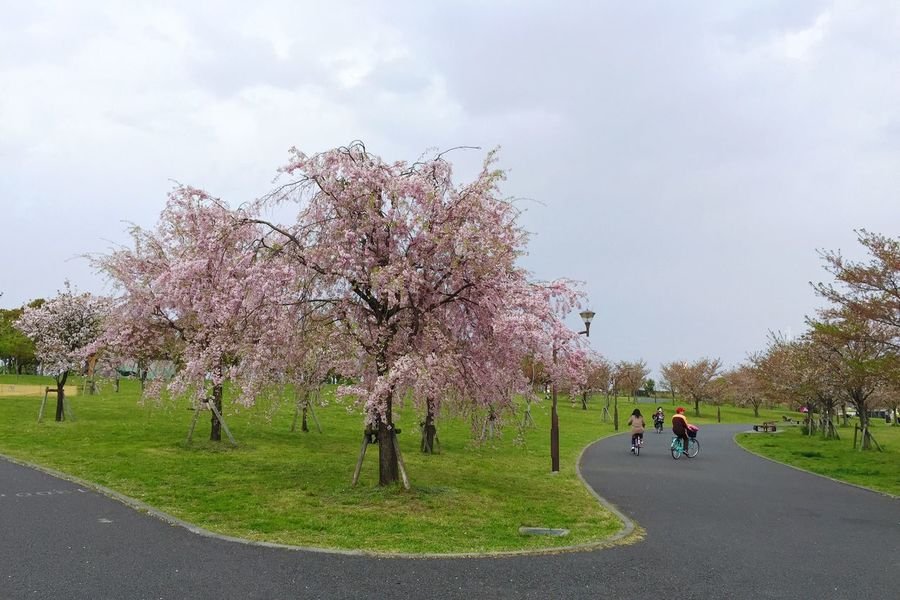 Spring Blossom Cherry Tree Check This Out Tadaa Community Traveling Japan Nature Tokyo Lost In The Landscape