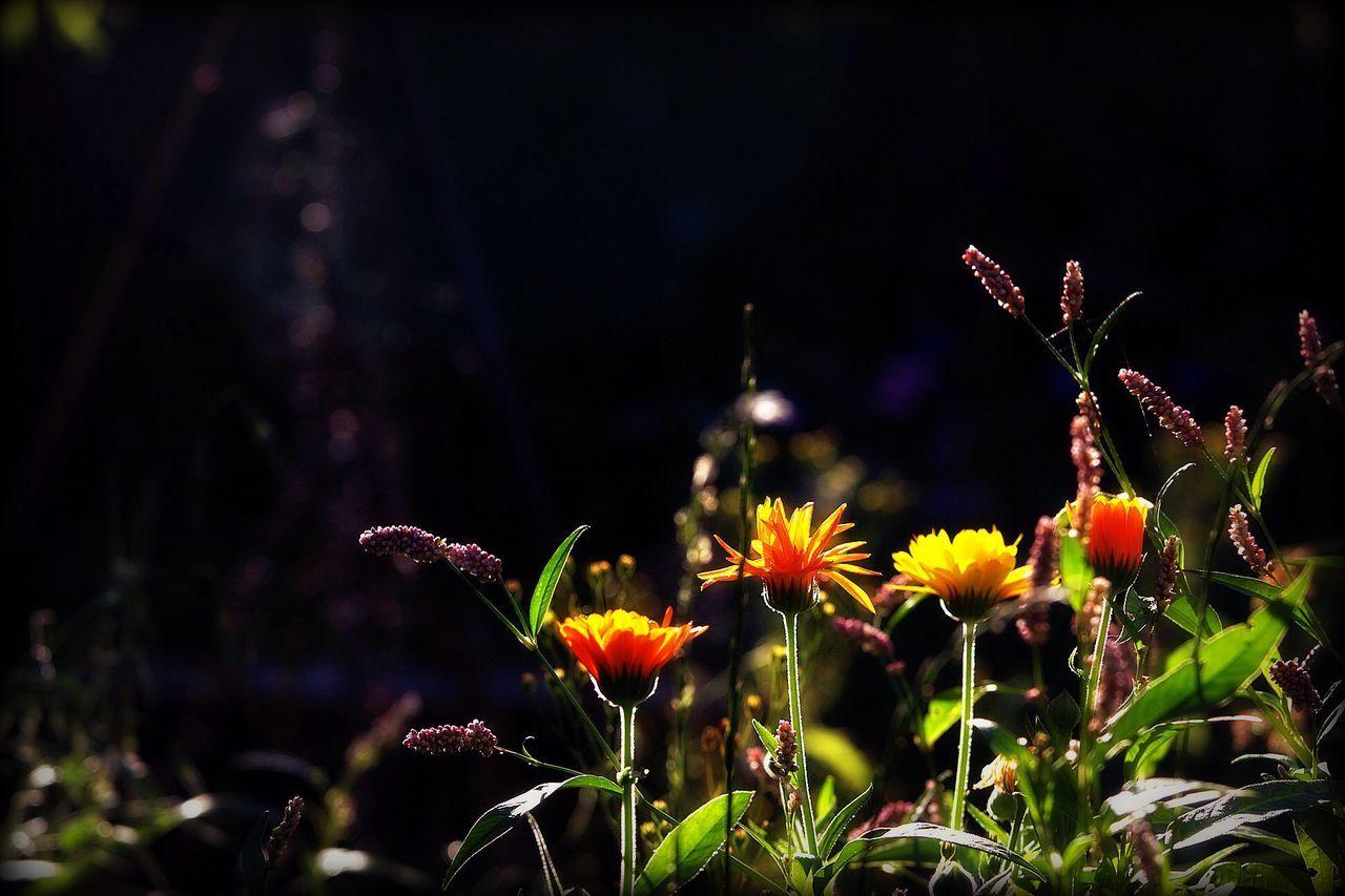 Garden Flowers Flowers,Plants & Garden Orange Flowers High Contrast Special👌shot Shadows & Lights