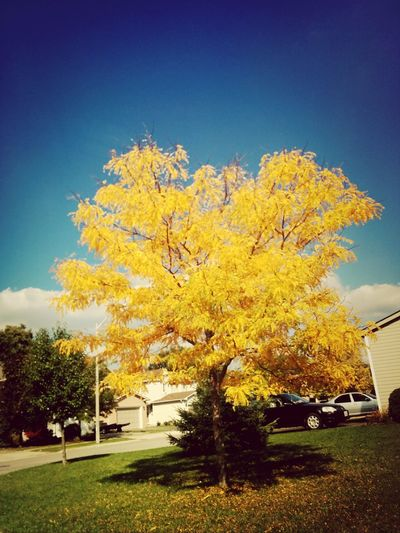 Lonely yellow tree Nature Trees Autumn
