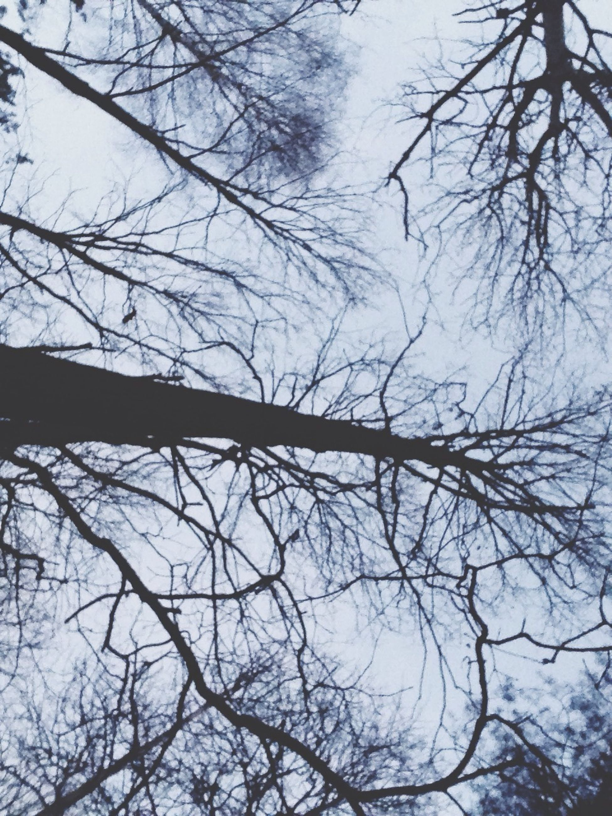 tree, branch, bare tree, low angle view, tranquility, tree trunk, nature, sky, silhouette, beauty in nature, tranquil scene, scenics, outdoors, growth, day, no people, forest, clear sky, idyllic, non-urban scene