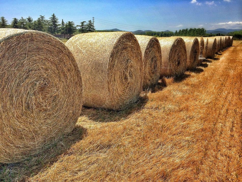 Beautiful stock photos of farm, Abundance, Agriculture, Bale, Blue