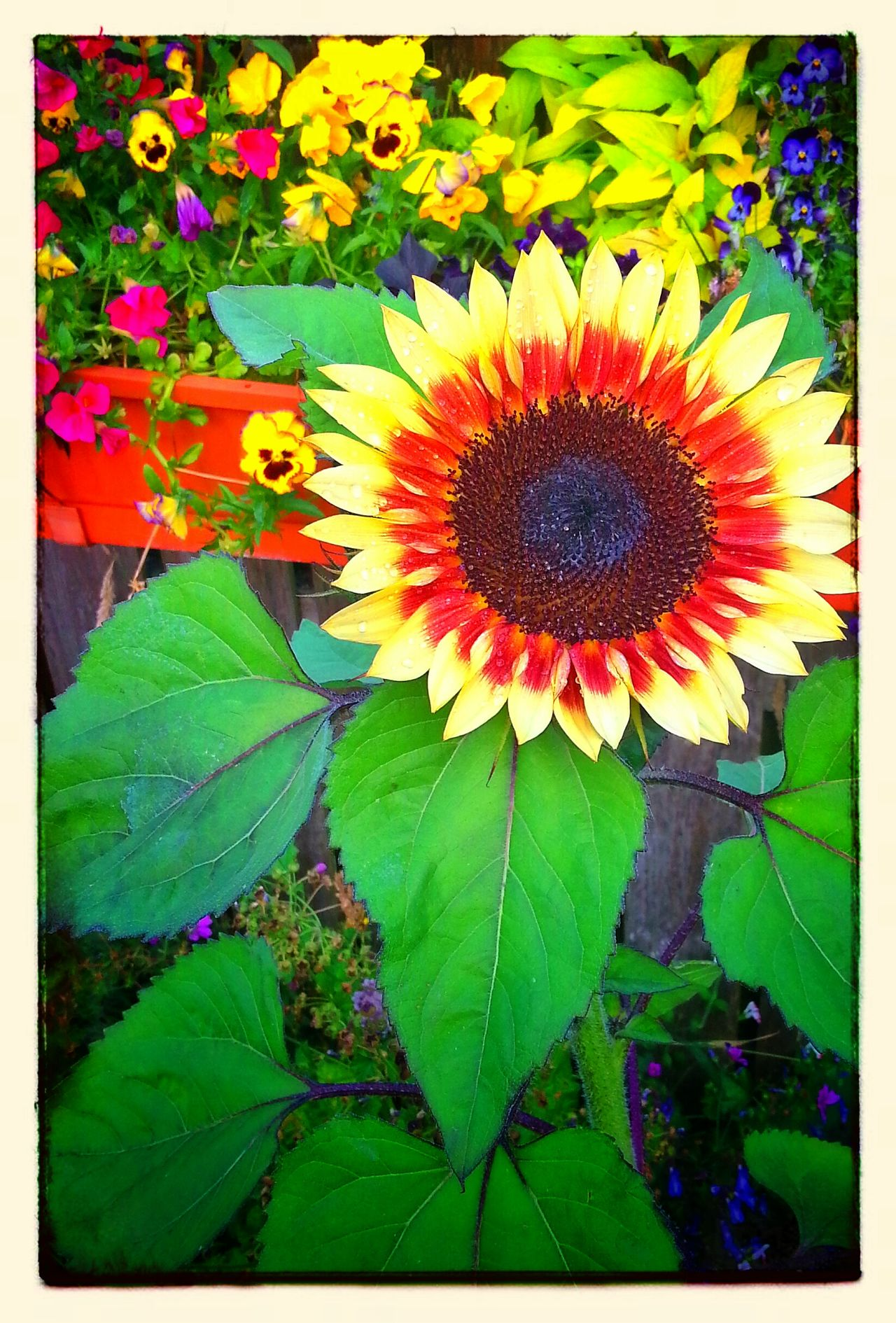 Colorful Vashon Island Flowerporn Burton Coffee Stand