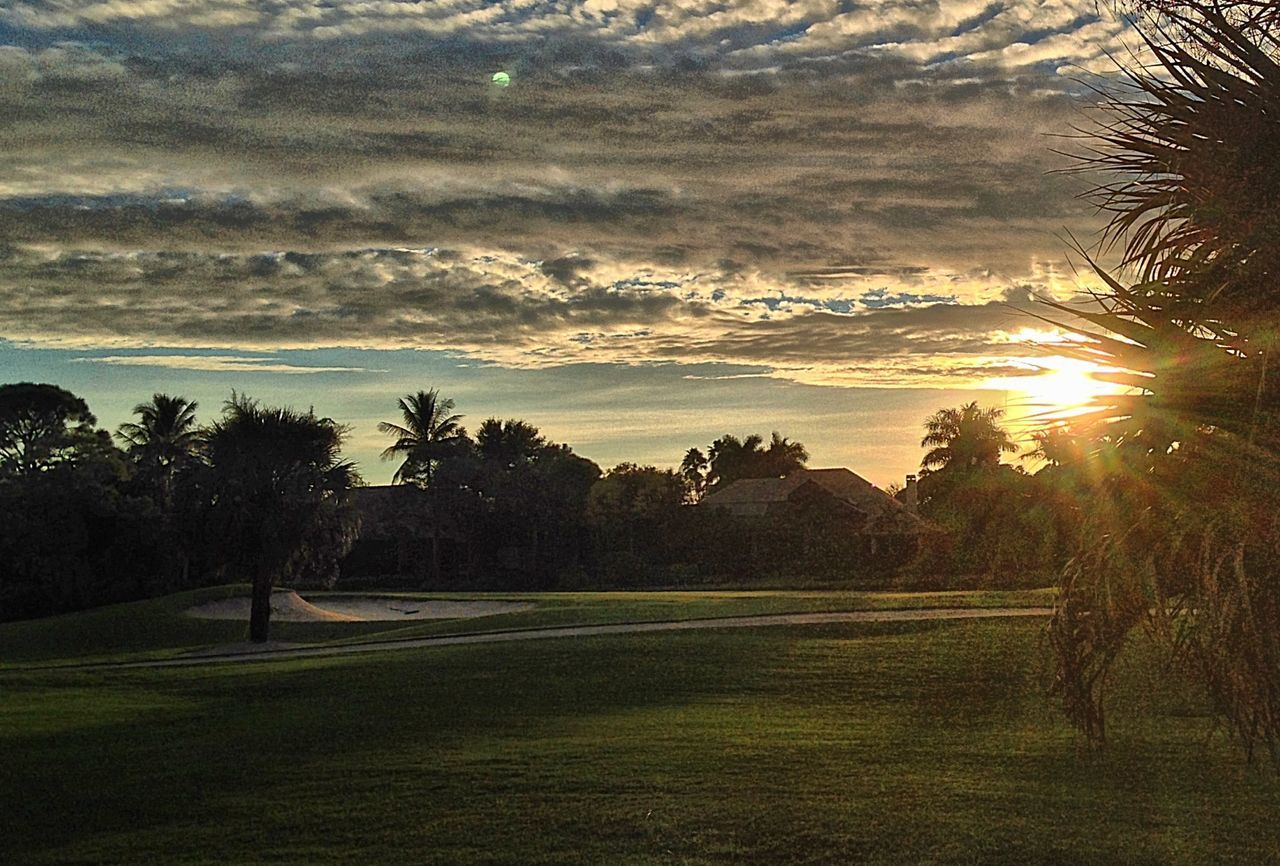 tree, beauty in nature, nature, tranquil scene, tranquility, no people, sunset, grass, sport, golf course, sunlight, scenics, golf, outdoors, sky, green - golf course, day