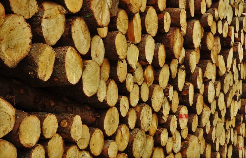Cut Wood Day Deforestation Forestry Industry Full Frame Large Group Of Objects Lumber Industry No People Pile Pile Of Wood Repetition Trunks Wood Wood - Material Wood Fire Wooden Log Woodpile Woodpile Woods Woods For Fire