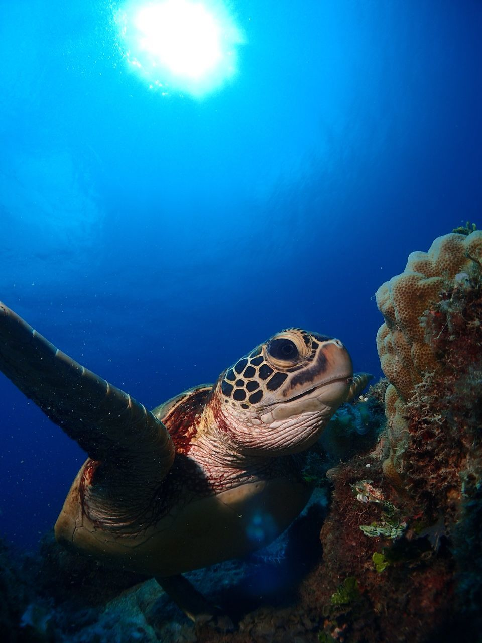 Close-Up Of Turtle Swimming By Coral In Sea