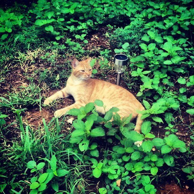 Guardian of the light! Cat Kitty Gardenlight Grass backyard feralcat ilovecats mypet mycat green