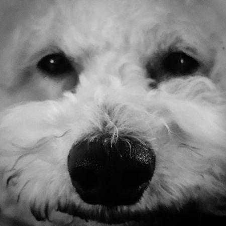 B&W Portrait Pet Portraits