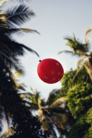 The Week On EyeEm EyeEm Best Shots Colors Red Red Balloon Balloon Nature On Your Doorstep Morning Light EyeEm Team Playing Playing With Balloons Tree Red Christmas Low Angle View Day No People Christmas Decoration Close-up Outdoors Sky Nature