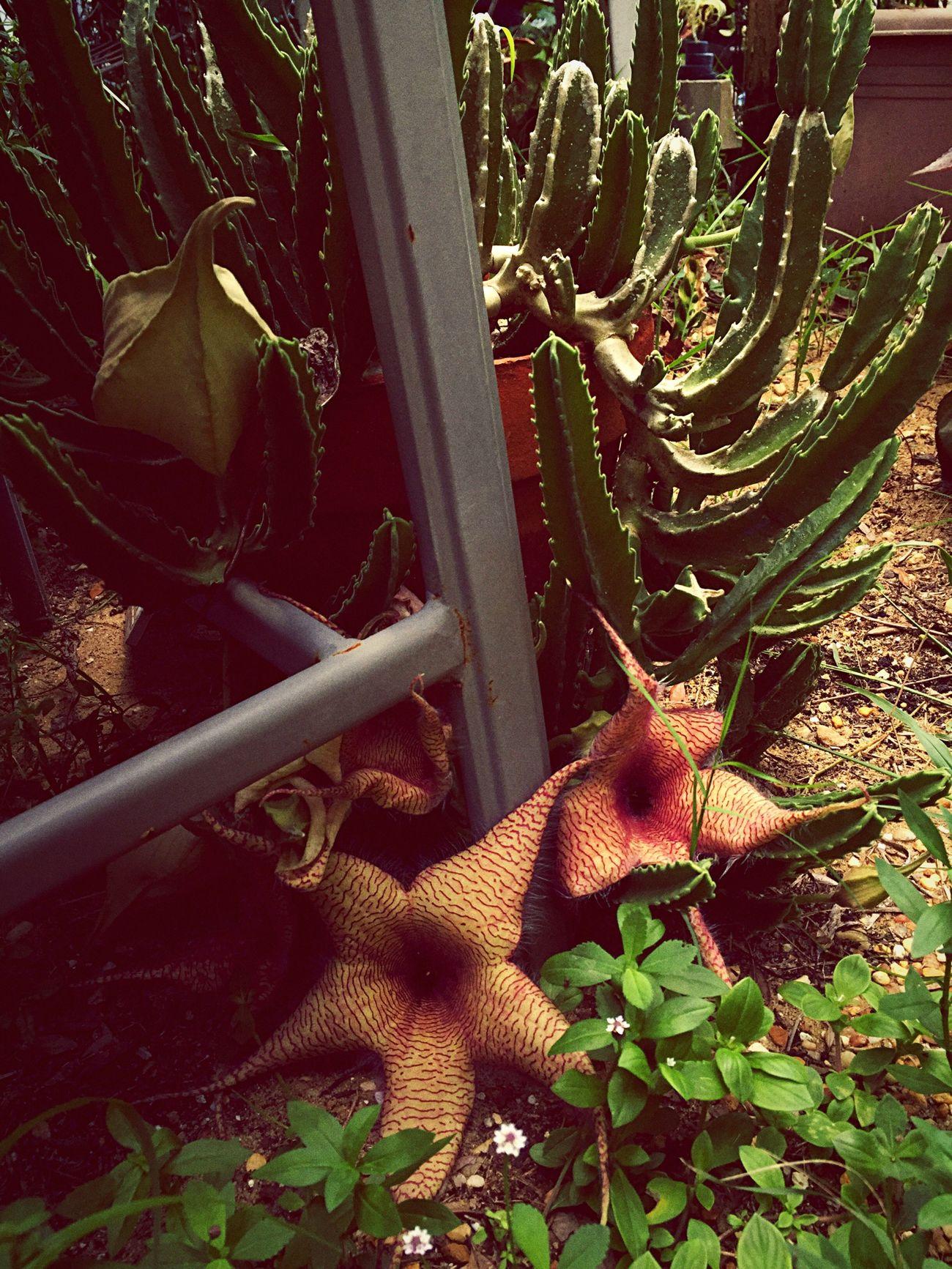 Doghairstudio In My Garden Gypsy Girl Creative Gardening