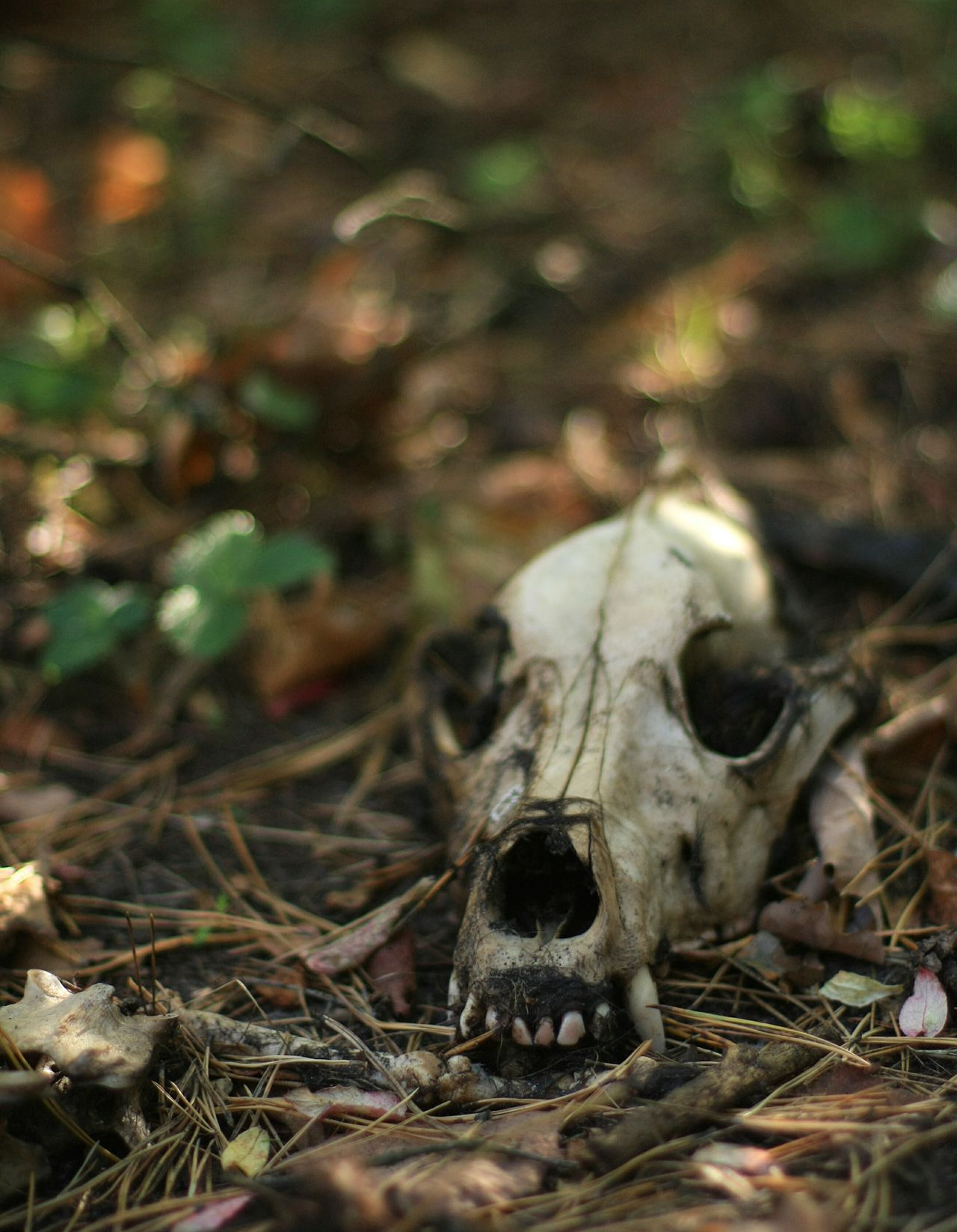 Animal Themes No People Close-up One Animal Domestic Animals Outdoors Day Mammal Nature Summer ☀ Summer Memories 🌄 Dead 50mm 1.4 Canonphotography Dead Animal Russia россия EyeEmNewHere Long Goodbye